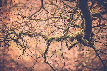 Oude boomtak vol mos in herfstsfeer van