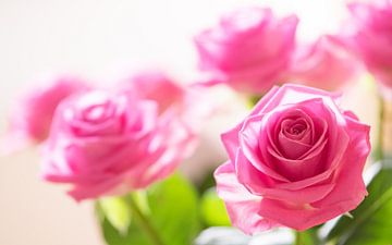 Rosen in Pink von Gerda Hoogerwerf