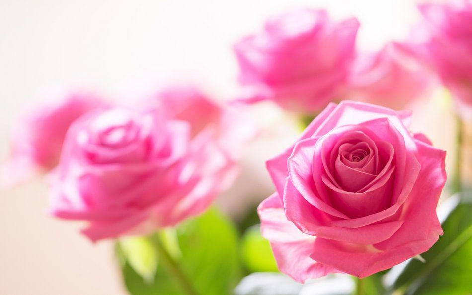 Roze Rozen van Gerda Hoogerwerf