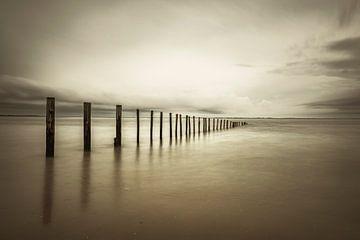 Polen in am Strand im Sepia von Sjoerd van der Wal