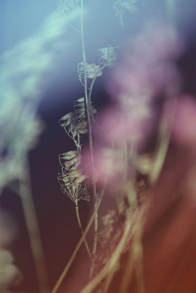 Floral-Abstrakt-1HF van Pia Schneider