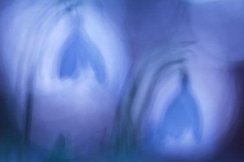 Snowdrops  van Lieuwkje Vlasma
