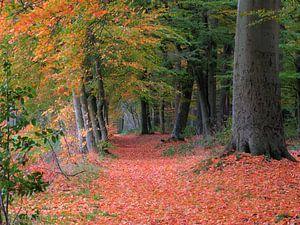 Bospad in de herfst