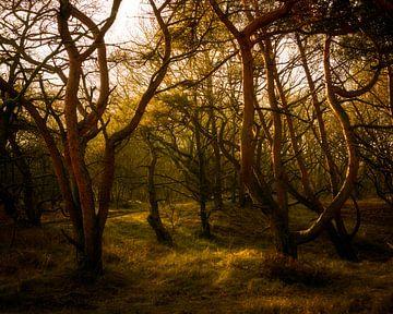 golden forest von claes touber