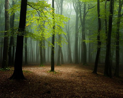 Het licht in het bos van Nando Harmsen