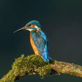Kingfisher (Alcedo atthis) von Richard Guijt