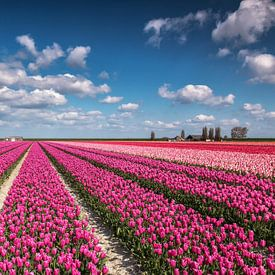 Kleurrijk tulpenveld van Ilya Korzelius