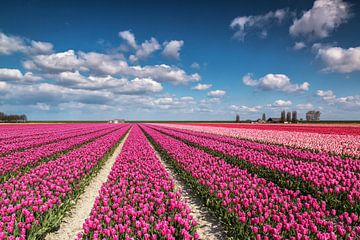 Kleurrijk tulpenveld von Ilya Korzelius