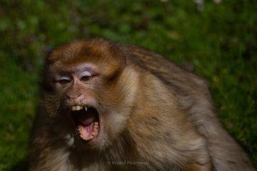 Angry Monkey van Kristof Piotrowski
