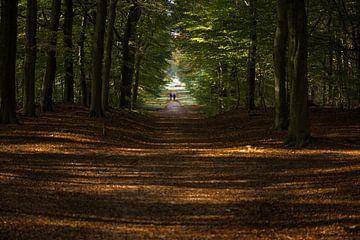 Een herfstwandeling op de Veluwe von Cilia Brandts