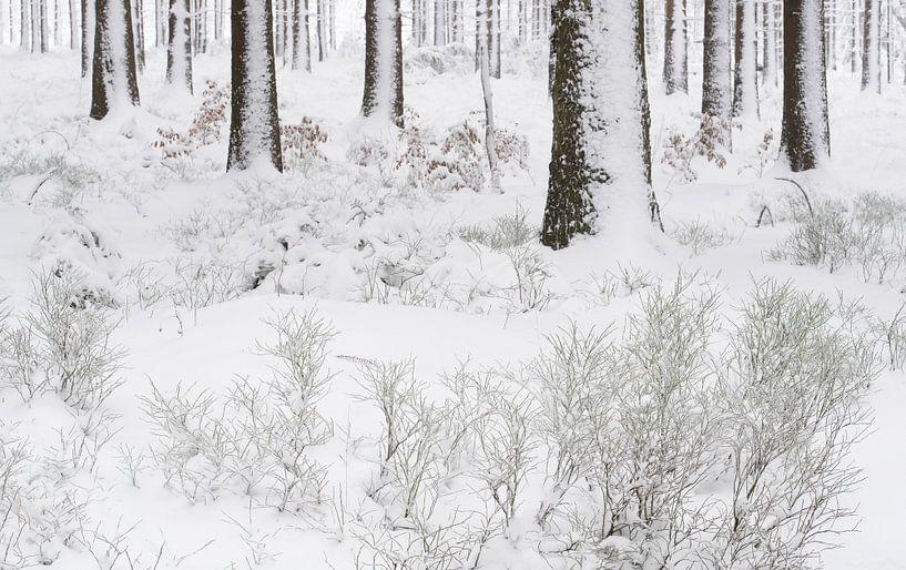 Een winters bos van Gonnie van de Schans