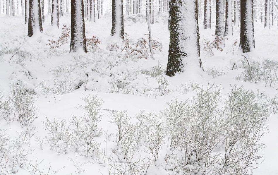 Een winters bos