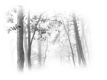 Mysterienwälder von Dietjee FoTo