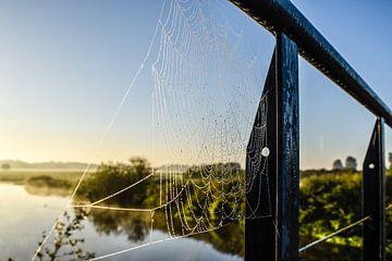 Door een spinnenweb gezien... van Marjo Kusters