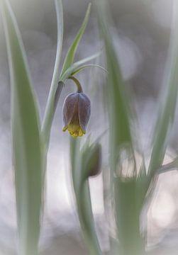 Blumen Teil 77 von Tania Perneel
