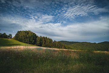 Sommer und Natur