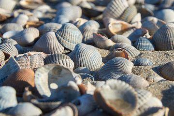 Muscheln am Strand von Ad Jekel