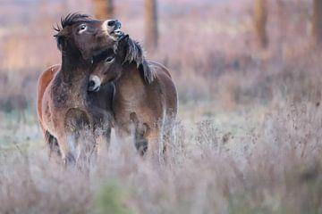 Exmoor Love van Karin van Rooijen