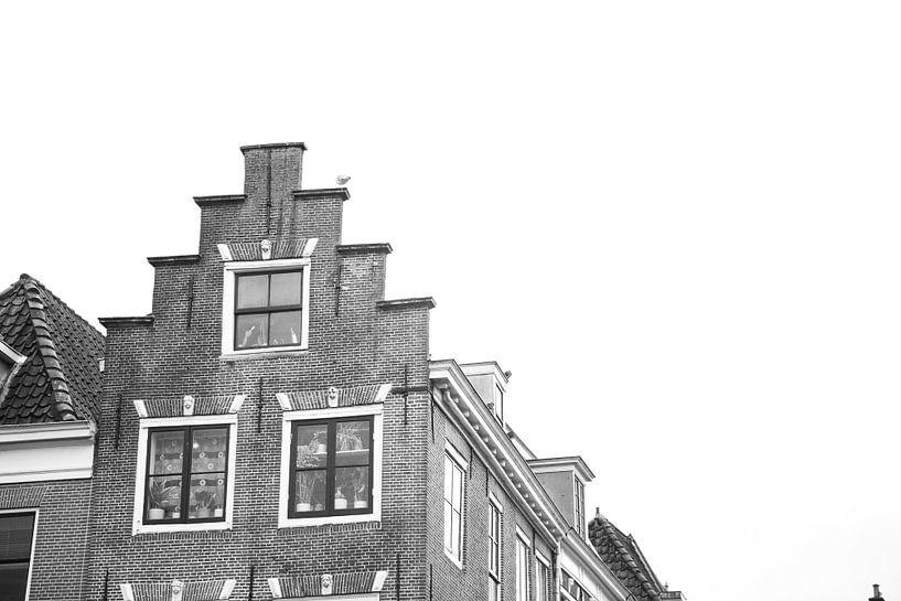 Meeuw op het dak van Erwin de Zwart