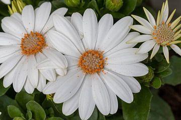 Blumen von Bas Groenendijk