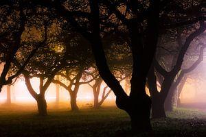 Misty trees van