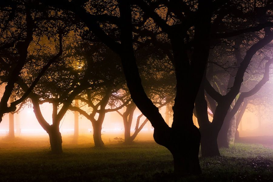 Misty trees van Joost Lagerweij
