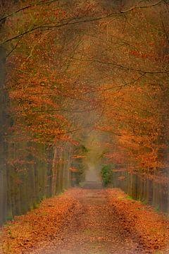 Allee der Bäume von eric brouwer