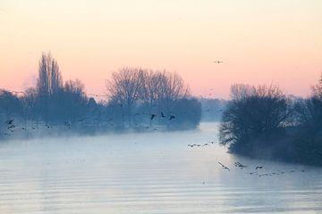 Bremen : Morgennebel an der Weser