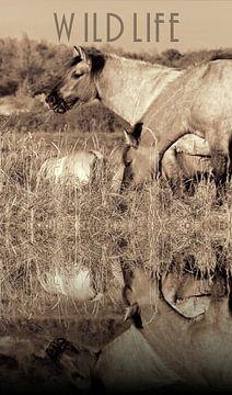 Konikpaarden aan het water van Carla van Zomeren