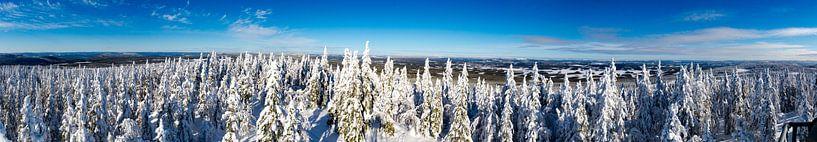 Besneeuwde panorama van Zweedse heuvels van Kevin Pluk
