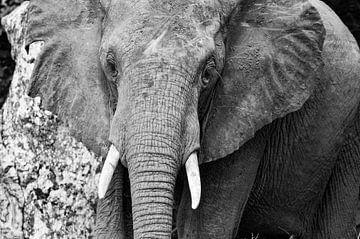 Olifant in Afrika sur Jolanda van Straaten