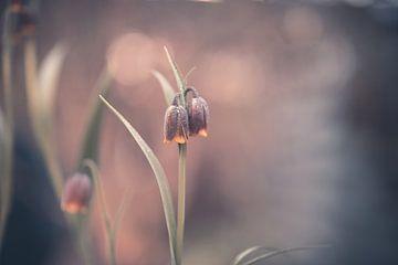 Blumen Teil 101 von Tania Perneel