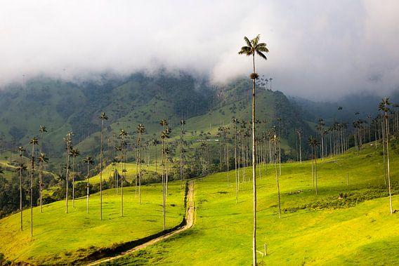Waxpalmbomen in de Cocoravallei bij Salento, Colombia van Bart van Eijden