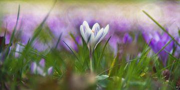 Begin van de lente van Steffen Gierok