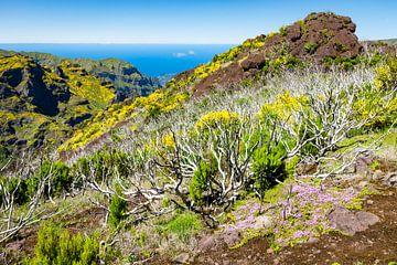 Bergen en oceaan in Madeira von Michel van Kooten