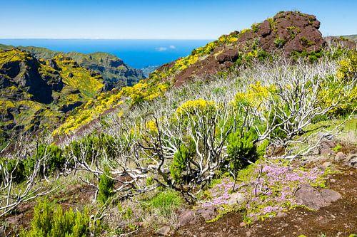 Bergen en oceaan in Madeira