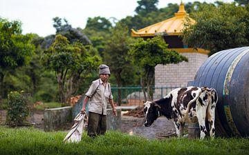 Koeien boerderij Nepal van Merijn Geurts