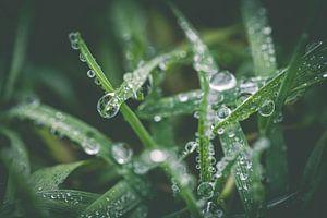 Close up van gras met waterdruppels van ElkeS Fotografie