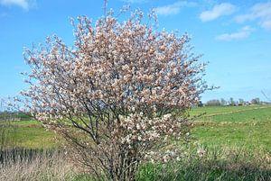 Blüte im Ackerland von M de Vos
