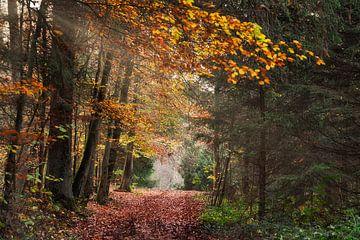 Herbstwald von CSB-PHOTOGRAPHY