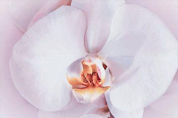 Close-up van een zacht roze orchidee van Nannie van der Wal