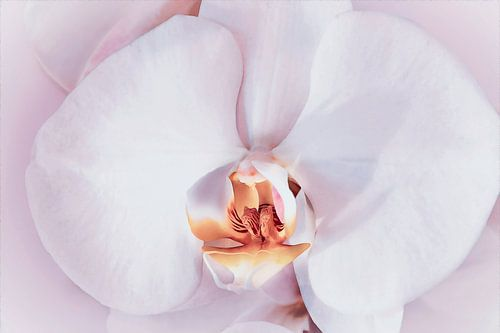 Close-up van een zacht roze orchidee