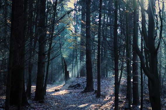 Lichtinval bos