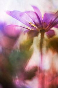 De kleurrijke lente van Bob Daalder