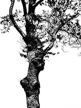 Baum (in schwarz-weiß) von Caroline Lichthart