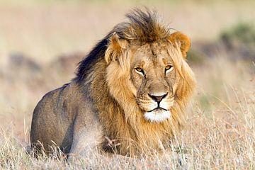 Majestueuze Leeuw van Angelika Stern