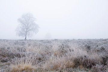 Boom in de mist van Barbara Brolsma