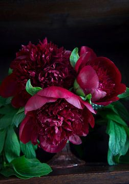 Donkerrode Pioenrozen met donkere achtergrond sur Marion Moerland