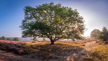 Verkoelende boom op de heide van Remco Piet