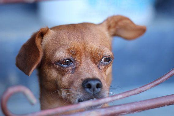 Crying dog